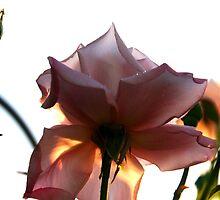 princess of the roses by shrdn