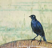 The Grackle by John Edwards
