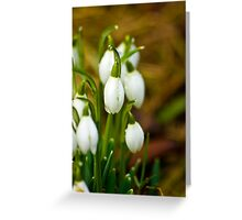 Snowdrops #1 Greeting Card