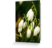 Snowdrops #2 Greeting Card