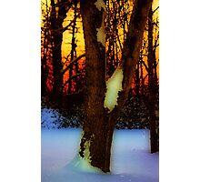 Snow Dawn Photographic Print