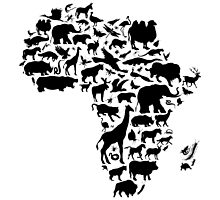 Animals of Africa by Emir Simsek