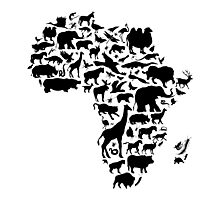 Animals of Africa Photographic Print