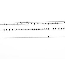 birds on a wire by Sarah Burnie