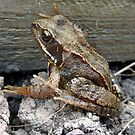 Common Frog by trish725