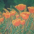 Poppies of the Field by Karirose