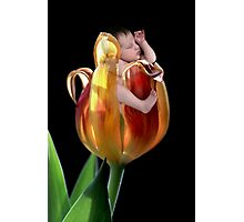 Tulip baby Photographic Print