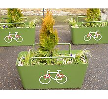 3 Green Planters Photographic Print