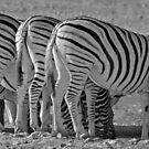 Bottoms up! - Etosha NP Namibia Africa by Beth  Wode