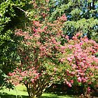 Spring Trees by flowers2love