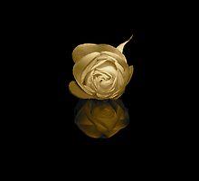 Una Rosa Su Acqua by ParkDG