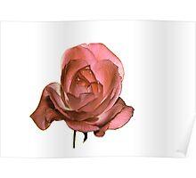 Una Rosa Con Acqua Poster