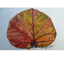 Leaf. Nha Trang Vietnam. Pen and wash 2013Ⓒ Photographic Print