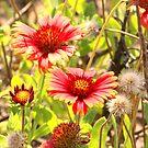 A Wildflower's Beauty by Stormy Brannan