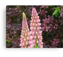 happy marriage of berberis and lupin Canvas Print