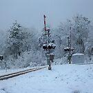 Winter Tracks by Happywoman