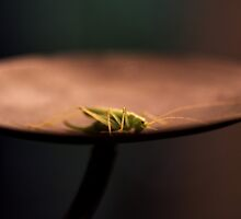 Bug Art by Annie Lemay  Photography