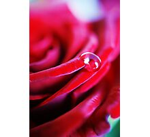 Rose Water (2) Photographic Print