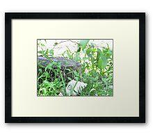 Fence. Framed Print