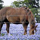 Grazing in the Bluebonnet Field by Susan Russell