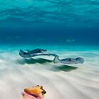 Two stingrays &amp; a shell went into a sandbar... by muzy