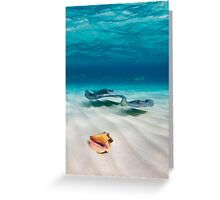 Two stingrays & a shell went into a sandbar... Greeting Card