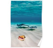 Two stingrays & a shell went into a sandbar... Poster