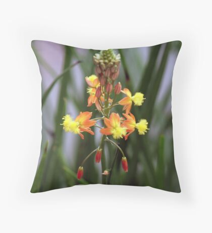 Commonly called Bulbinella or Burn Jelly Plant Throw Pillow