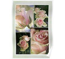 rose quartet for A.W. Poster