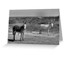 Wild Donkeys Greeting Card