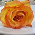 My favorite color Rose by Diane Trummer Sullivan