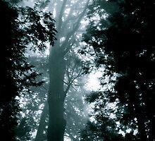 Misty Trees by Valerie Rosen