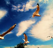 Seagulls at Niagra Falls, Canada by Arduous