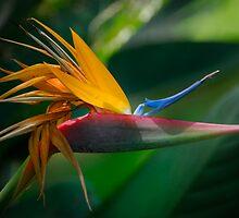 Flower of Paradise by linaji
