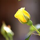 Yellow Bud by Maryanne Lawrence