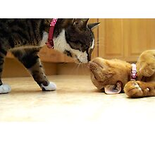 Cats Kissing Photographic Print