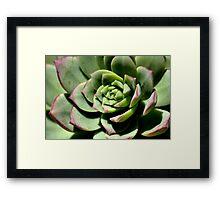 Shadows of Cactus Framed Print