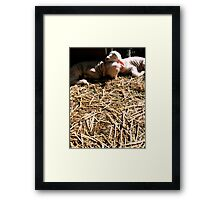 Loving Lambs Framed Print