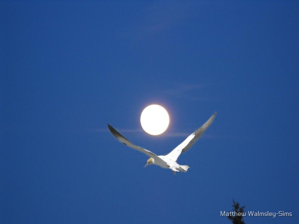 Moon and bird (Ganet) by Matthew Walmsley-Sims