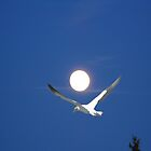 Moon and bird (Ganet) by Matthew Sims