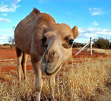Baby Camel, Outback Australia by Joanna Beilby