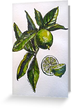 Limes. Pen and wash. 42x32cm. by Elizabeth Moore Golding