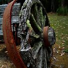 Mossy Wagon Wheel,Otway Ranges by Joe Mortelliti