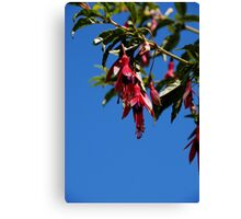 Fuchsia Sky at Logan Canvas Print