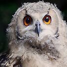 Hi..I am an owl baby  of 3 months old ... by John44