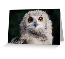 Hi..I am an owl baby  of 3 months old ... Greeting Card