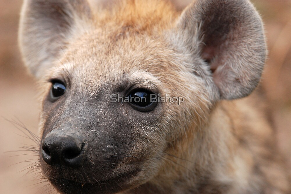 Fierce Hyena cub! by Sharon Bishop