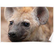 Fierce Hyena cub! Poster