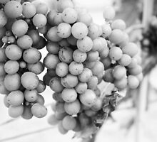 Grapes by Jennifer Saville