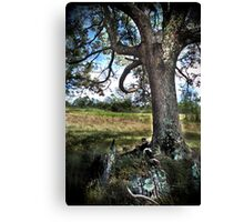 HDR Nature Canvas Print